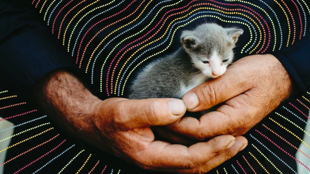 Kitten in the hands of a man
